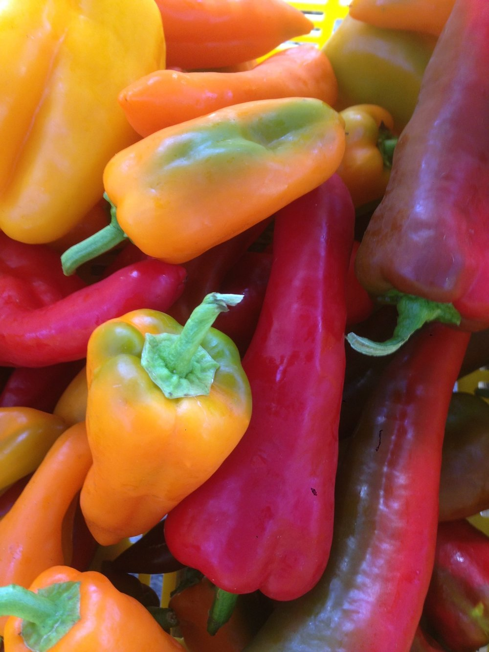 A few of our pepper varieties: Carmen (red), oranos (orange), and flavorburst (yellow) peppers.