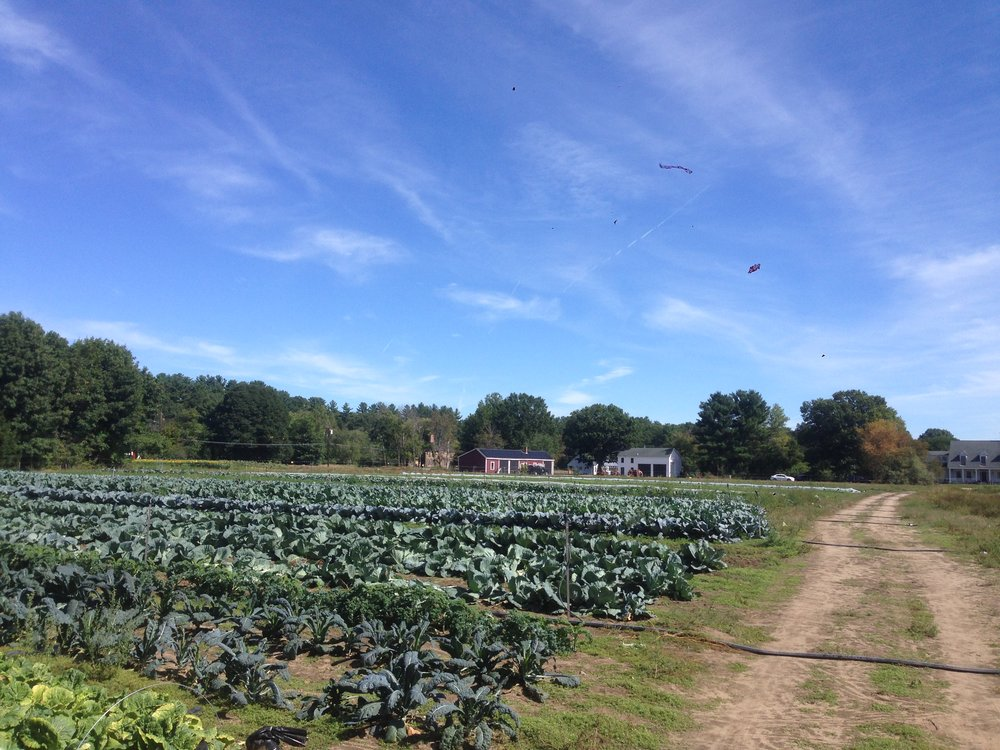 A view of the farmstead from the brassica field- a sea of kale, cabbage, and broccoli!