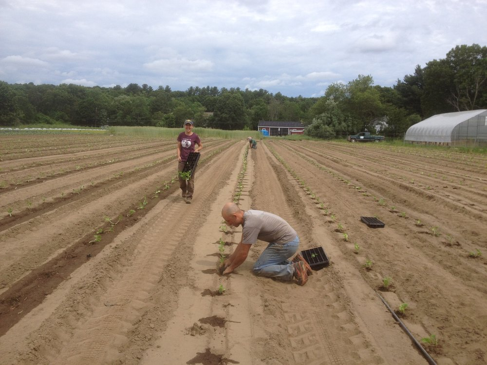 Shaun and Melissa transplant winter squash earlier last week.