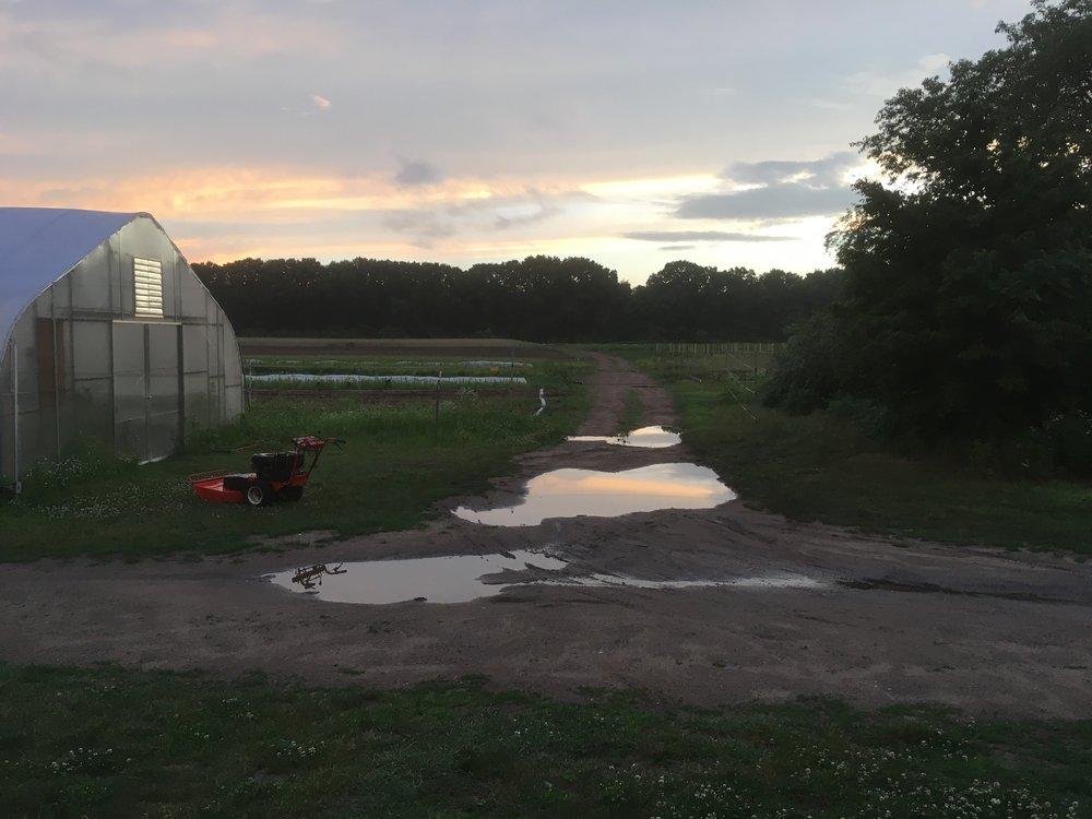We celebrate summer puddles!
