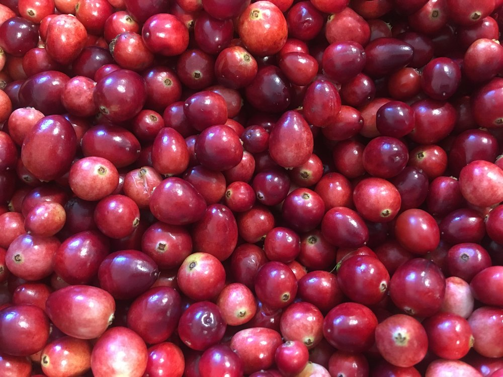 Organic cranberries from Fresh Meadows Farm in Carver, MA