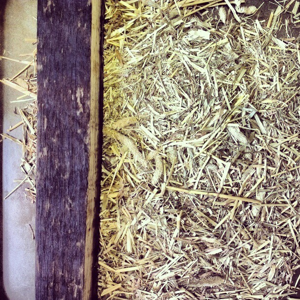A whisky barrel stave and some roasted meadow hay with Birch bark.   A plan is emerging for the making of a sweet syrup to drizzle over nitro-aerated sourdough pancakes. There is also a gap in the dish that could be filled with a foam or maybe a burnt or pressure-caramelised cream.