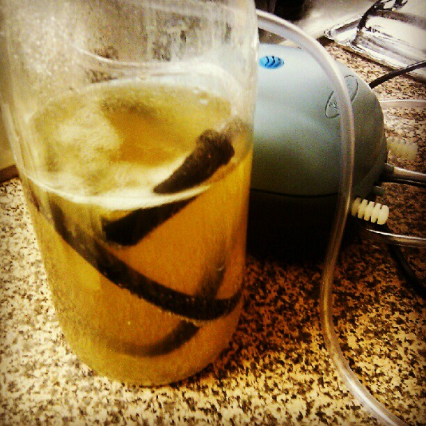 Making vinegar with '97 Talinda Oaks Chardonnay, Apple mother and an aquarium bubbler (Taken with  Instagram )