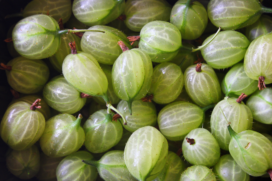 Gooseberry season is upon us
