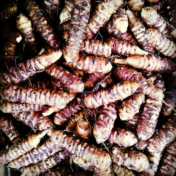 The first Jerusalem Artichokes of the season @franklinsse22