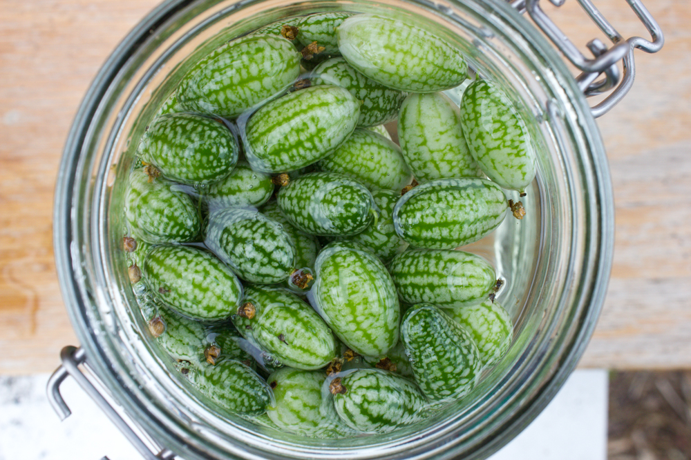 Cucamelons in brine
