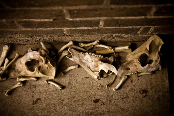 Welcome bones