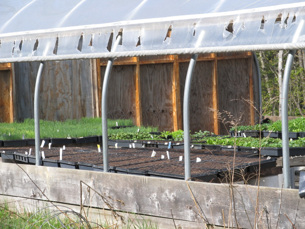 Seedling greenhouse