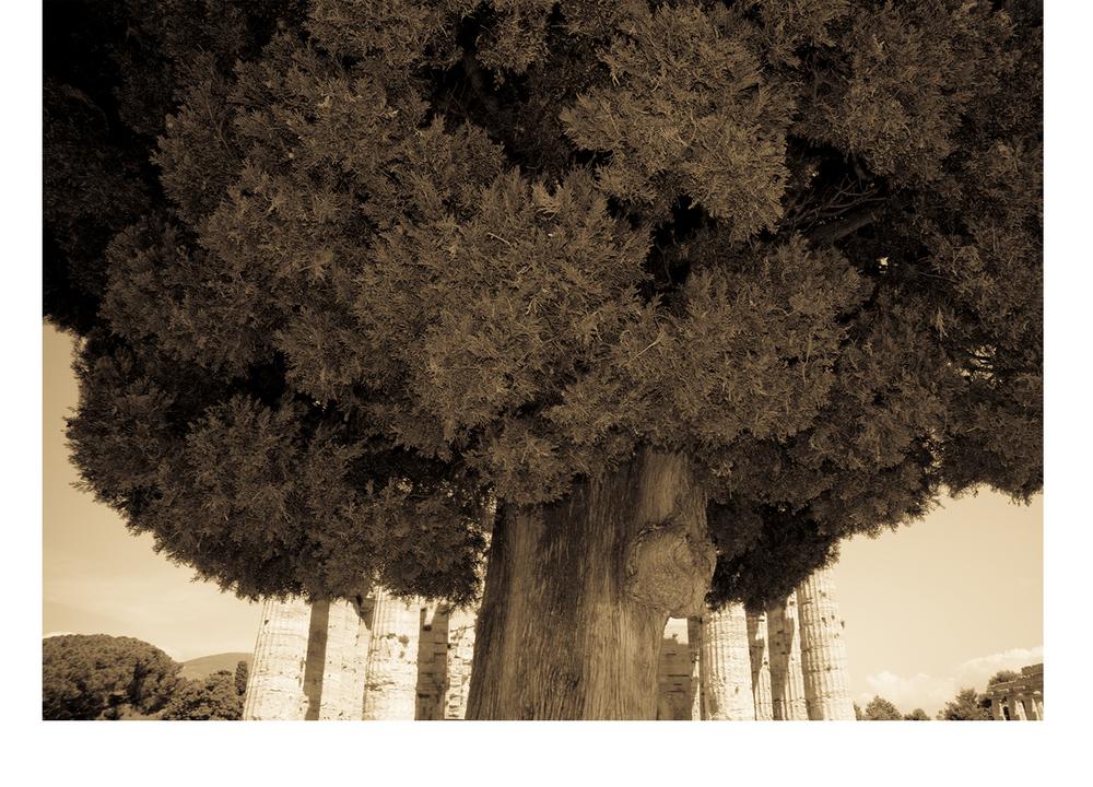 Tree_Italy.jpg