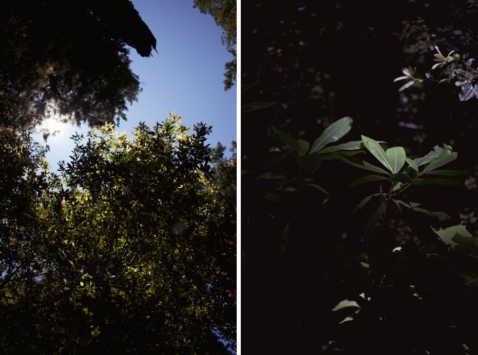 redwoods_01.jpg
