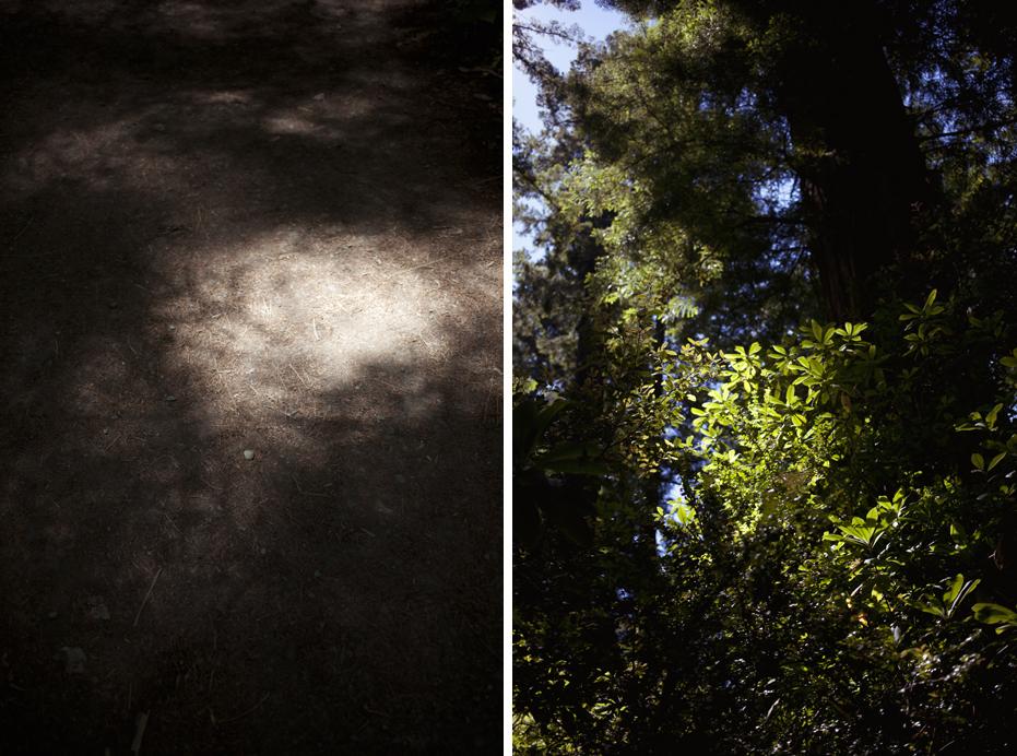 redwoods_03.jpg