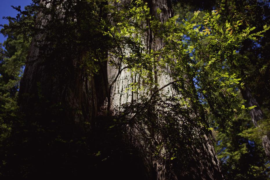redwoods_05.jpg