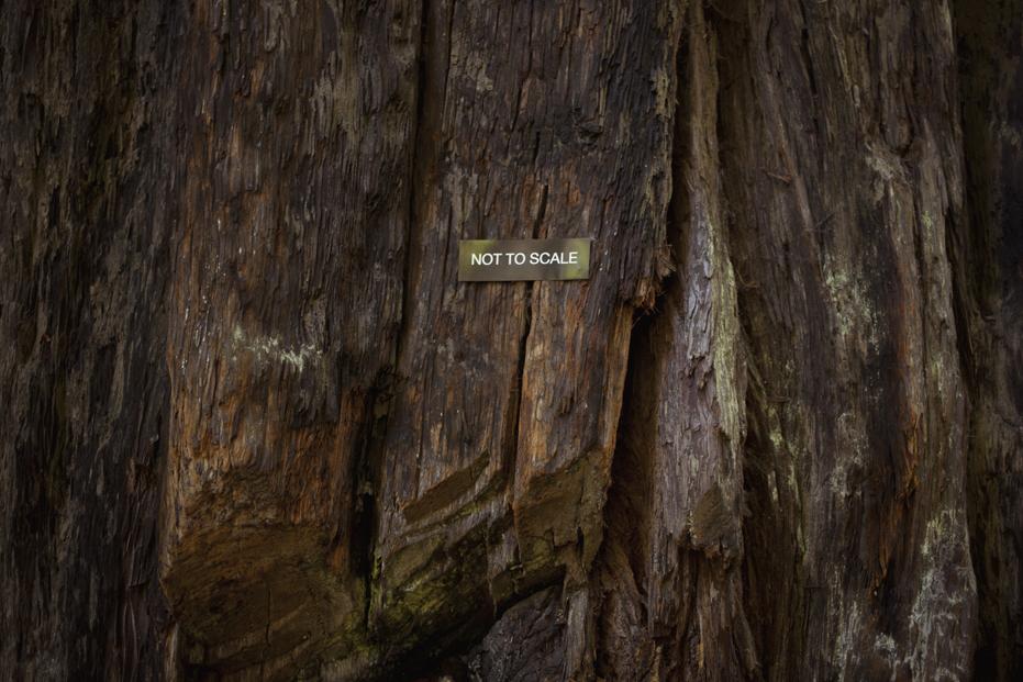 redwoods_07.jpg