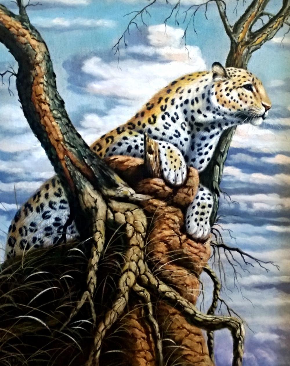 leopard_kallahari.jpg