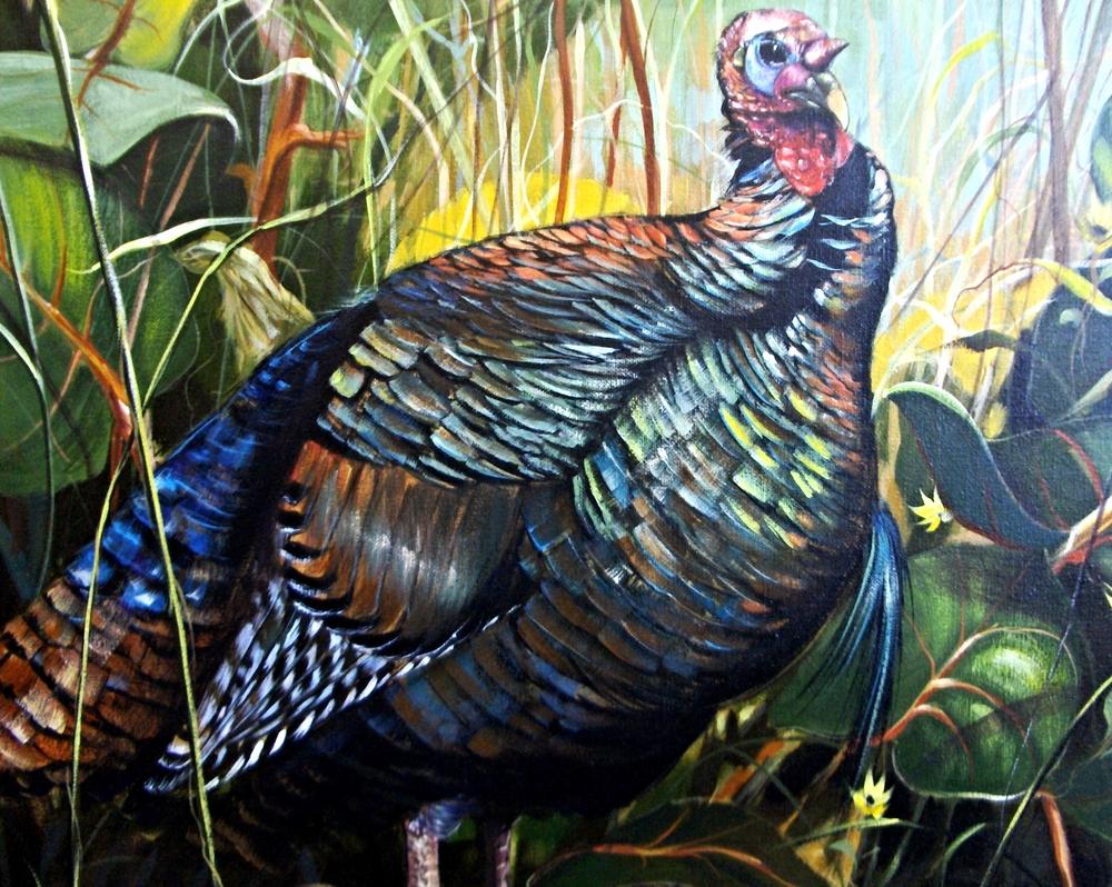 Osceola Turkey.jpg