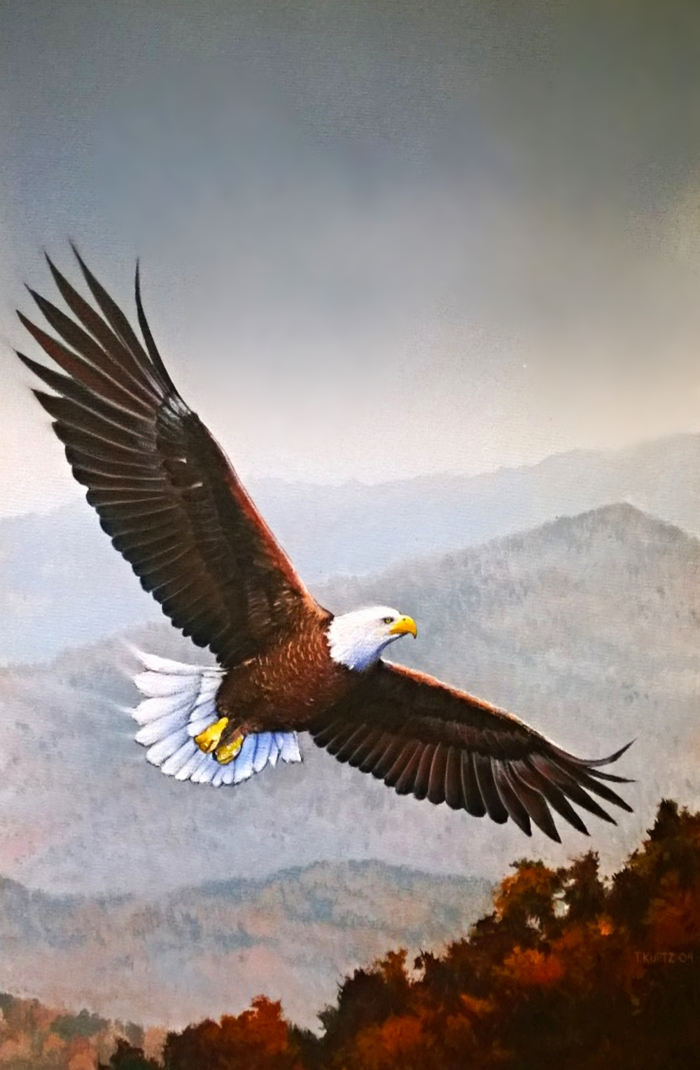 Eagle_Blue Ridge.jpg