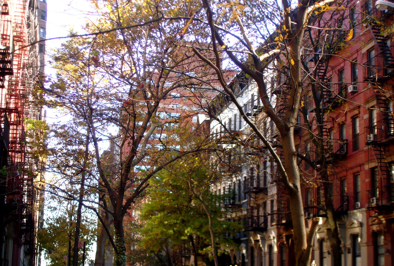 A touch of fall on my block :)