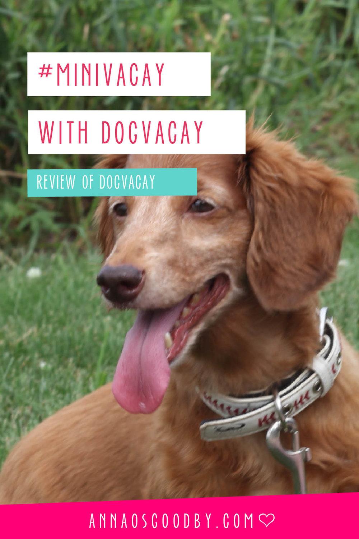 Anna Osgoodby Life + Design :: #MiniVacay with Dog Vacay