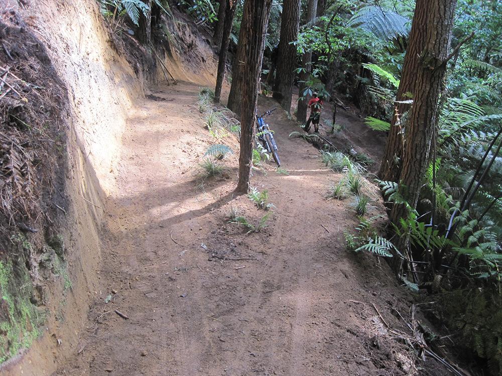 G-Rock Trail, Whakarewarewa Forest, Rotorua