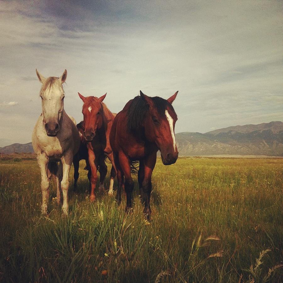 HorsesOfTheMedano_Instagram_2.JPG