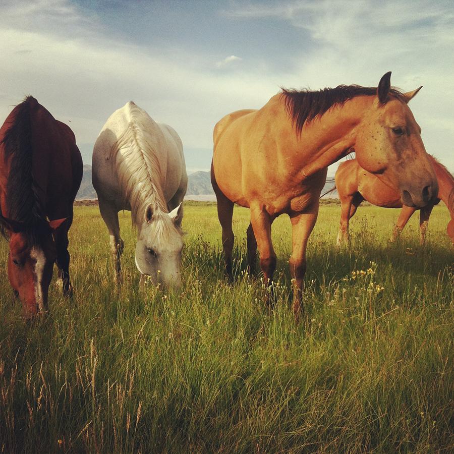 HorsesOfTheMedano_Instagram_4.JPG