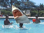 shark-in-pool.jpg