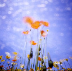 Dream Colors by Noriko Ohba
