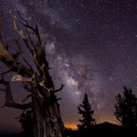 Blazing Bristlecone, by Tom Lowe