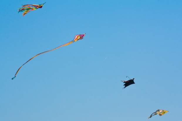 Kites_again