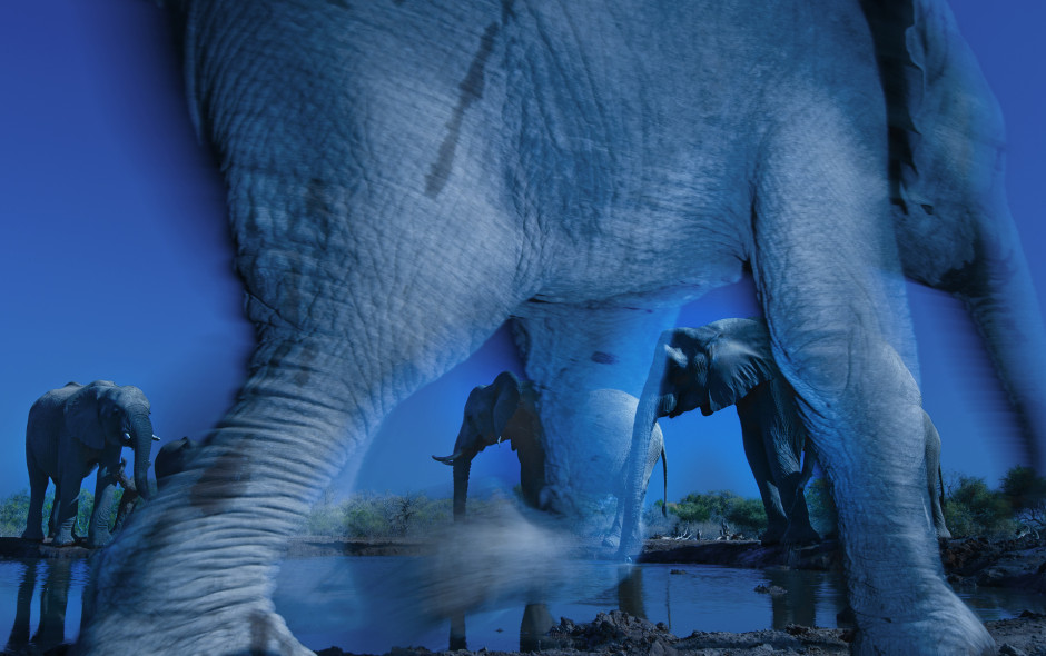 Essence of elephants, by Greg du Toit (South Africa) Nikon D3s + 16-35mm f4 lens + polarising filter; 1/30 sec at f22; ISO 800; Nikon SB- 900 flash + SC28 remote cord; mini-tripod; Nikon cable-release.