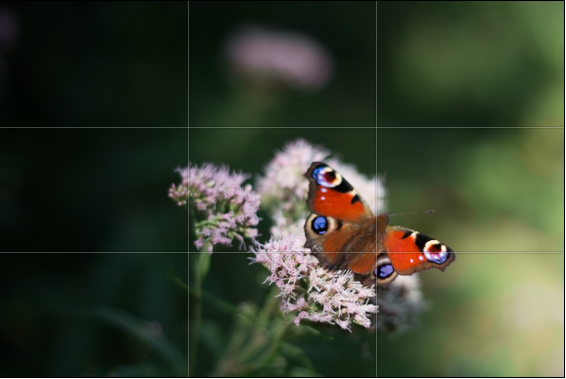The butterfly is sitting on the lower-right point-of-interest.