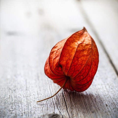 Leaf image via Shutterstock