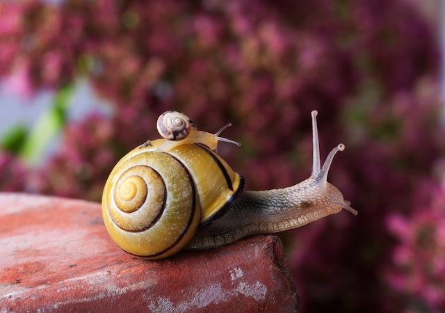 Snail image via Shutterstock