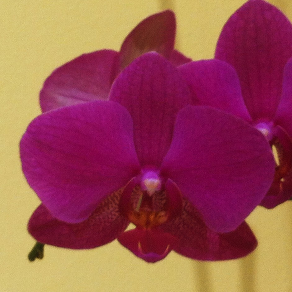 One orchid with digital zoom. Best avoided.
