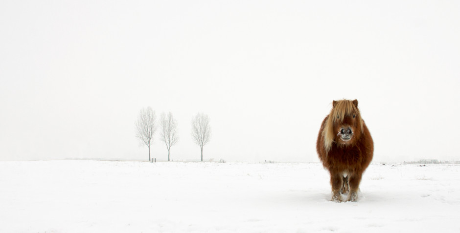 'The cold pony', ©Gert van den Bosch, Netherlands  Winner, Open Nature & Wildlife, 2014 Sony World Photography Award