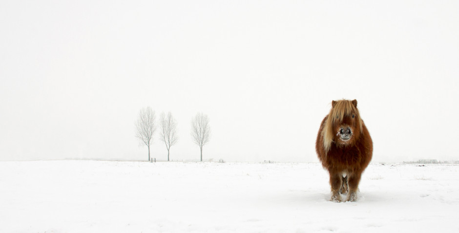 The Cold Pony, Gert van den Bosch (Netherlands) Winner Open Nature&Wildlife, 2014 Sony World Photography Awards