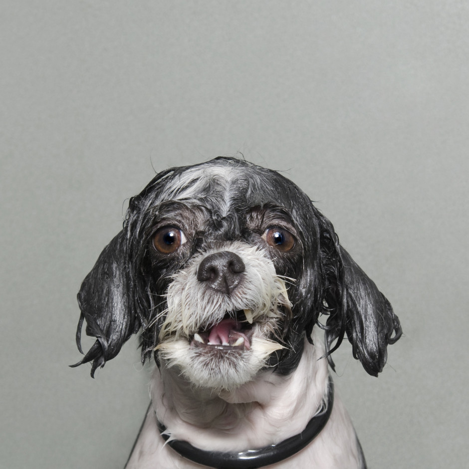 Wet Dog 2, Sophie Gamand (France) Portraiture Competition, 2014 Sony World Photography Awards