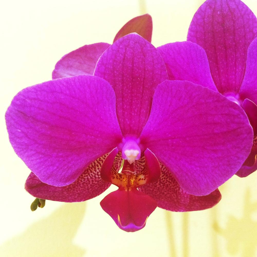 Orchid i.jpg