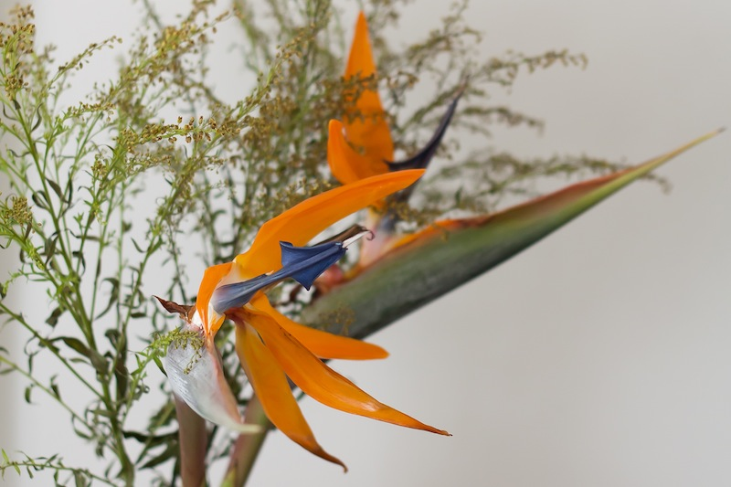 Birds of Paradise carefully positioned against an off-white wall