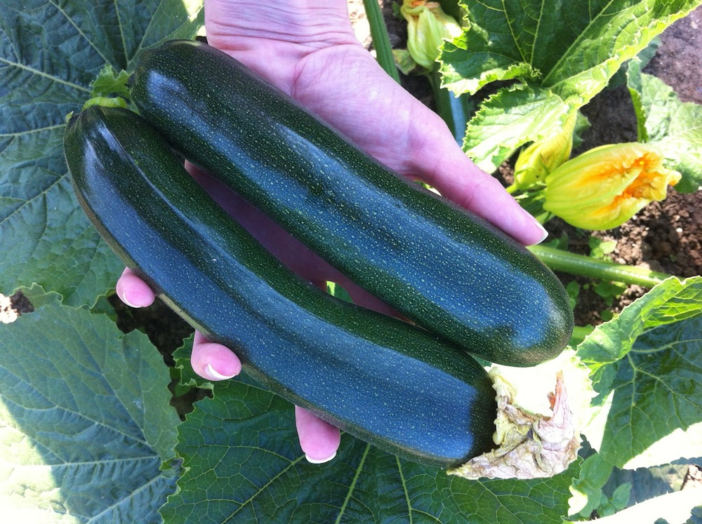 You can see from the bright edges of the frame how I stood between the courgettes and the sun to soften the light