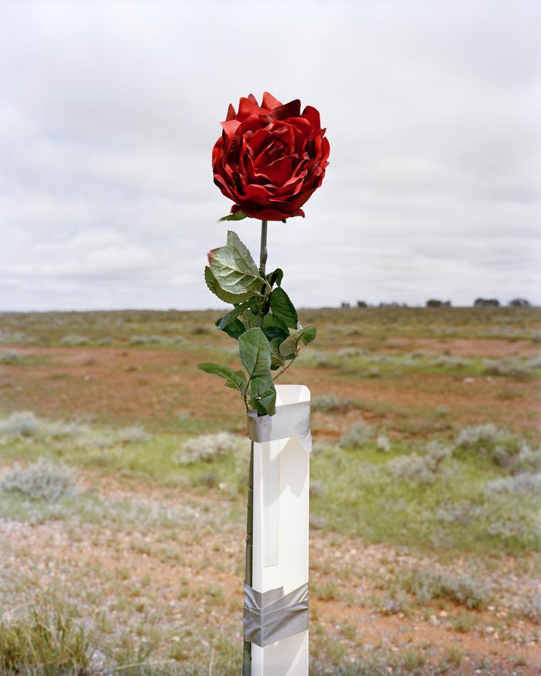TPS_flower.jpg