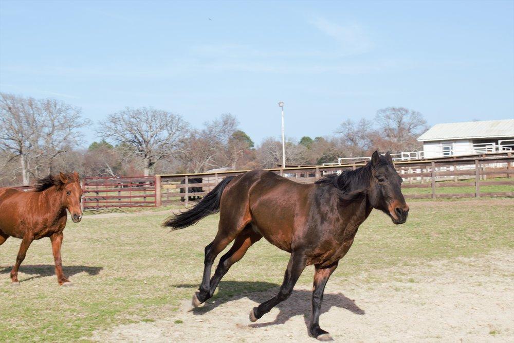 horses running 4.jpg