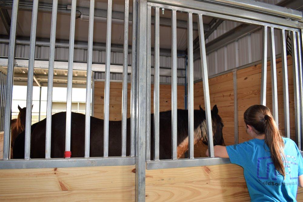 mack looking in stall.jpg