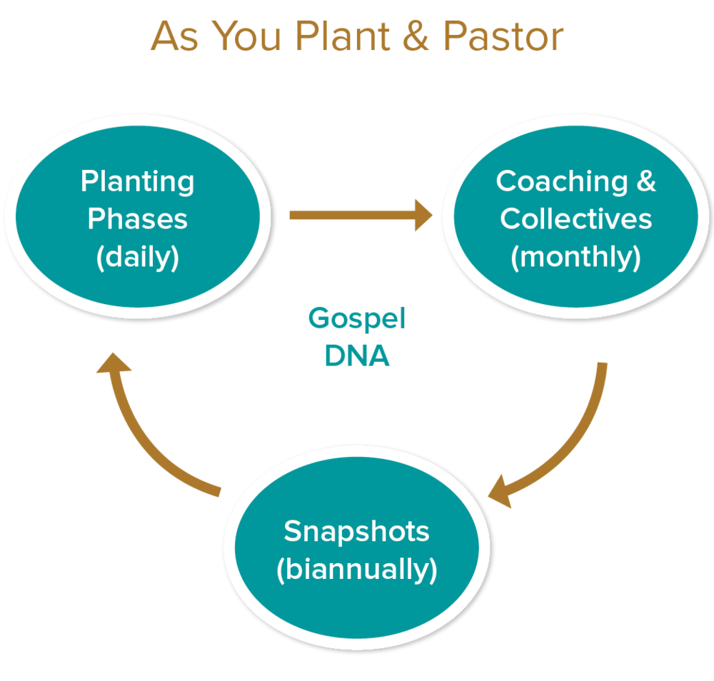 "as you plant & pastor  Gospel dna   -  you did a gospel dna design for your planting context. now you're implementing in tangible ways with real people. Jesus and the gospel is the center out of which everything you do flows. we remind you of this and walk with your through each phase of planting.   planting phases  - Our tracking tool will help you answer""when do I do what?"" wrong timing and unrealistic expectations can discourage and derail you. we will help you with a time-tested sequence of milestones to reach during the ""birthing...adolescence...maturing & multiplying"" phases of planting.   Coaching & collectives  -  YOU WILL RECEIVE TOOLS FOR you and your COACH TO USE TOGETHER TO REACH IMPORTANT GOALS you set for yourself. monthly COLLECTIVES with your PEER group of other planters and pastors provides regular encouragement for your mission. ""Just-in-time training"" is also available through sent when you need to improve as a leader.    snapshots  - As your LABOR tO PLANT & PASTOR, IT'S GOOD TO STEP BACK periodically and TAKE A ""SNAPSHOT"" of your work with your church. this provides reasons to CELEBRATE. It also surfaces areas to IMPROVE. THIS TOOL HELPS YOU DO THIS through the lens of the gospel DNA. We will continue to coach and walk with you as you set fresh goals to pursue for the advance of the gospel and your church."