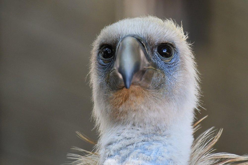 vulture-2848888_1920.jpg