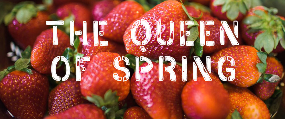 strawberry spring king