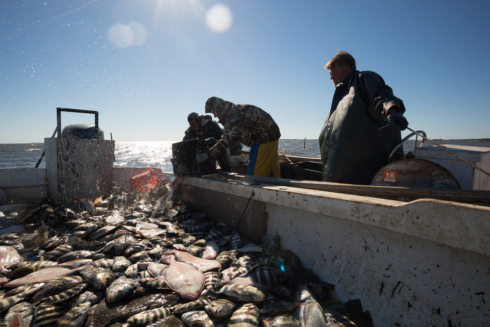 BOBBY AND ALBERTO DUMP A BIN OF FISH INTO THE BIG BOAT, AS EDDIE LOOKS ON. BY THE TIME THEY HAD FISHED FOUR ADDITIONAL POUNDS, THE BIG BOAT SAT DANGEROUSLY LOW IN THE WATER, LADEN WITH FISH.