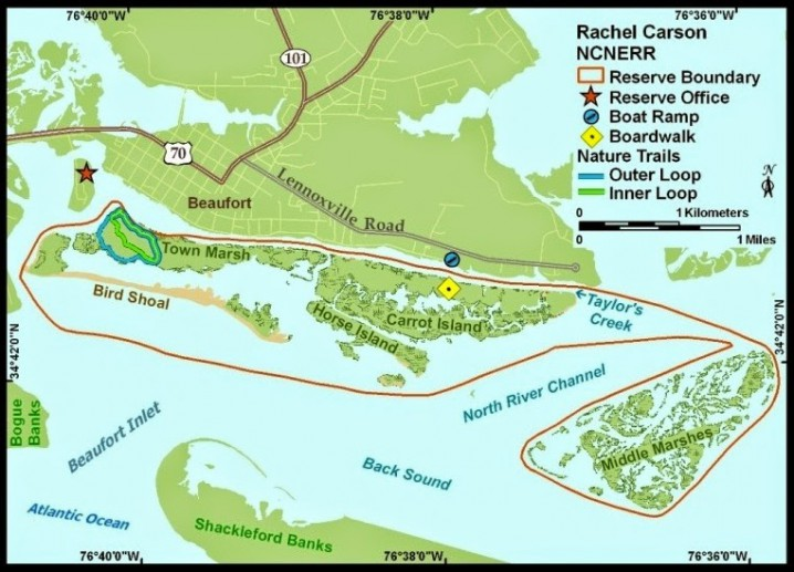 The Rachel Carson Reserve is between the mouths of the Newport and North rivers and directly across Taylor's Creek from the historic town of Beaufort in Carteret County. The main part of the site, just south of Beaufort, is a complex of islands which includes Carrot Island, Town Marsh, Bird Shoal and Horse Island. These islands are more than three miles long and less than a mile wide. Middle Marsh, separated from the rest of the site by the North River Channel, is almost two miles long and less than a mile wide. The entire Rachel Carson component is 2,315 acres. Acquisition of the area was completed in 1985, with the addition of Middle Marsh in 1989. Map: N.C. Division of Coastal Management.