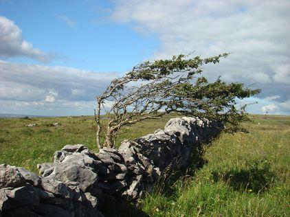 hawthorn wild elements.jpg