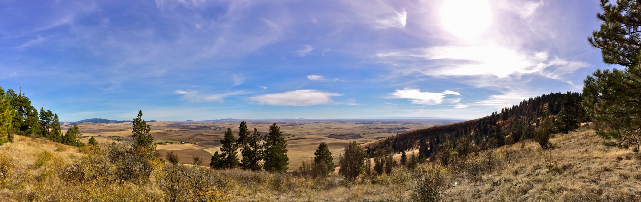 Looking south from Kamiak Butte, Whitman County, WA. October 2013.